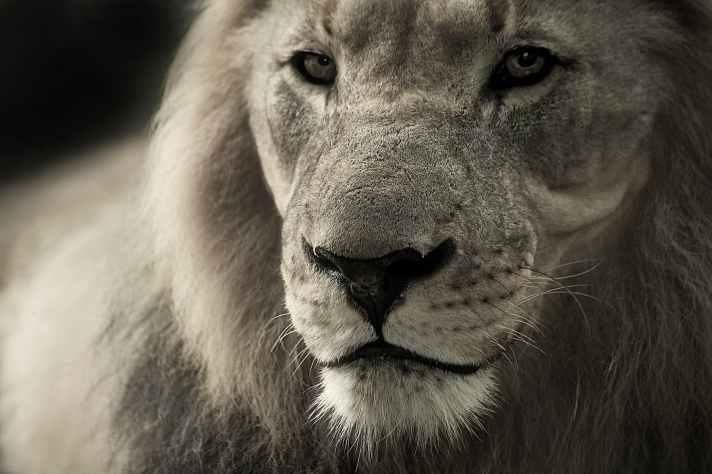 nature animal eyes fur
